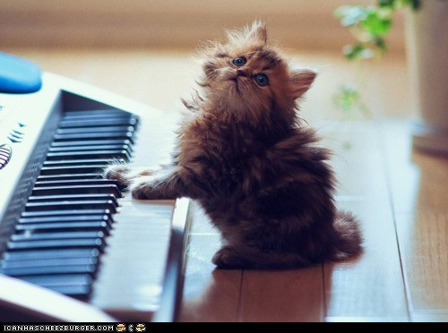 Cats cyoot kitteh of teh day keyboards kitten Music musicians pianos
