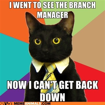 branch,branch manager,Business Cat,Cats,Memes,puns,stuck,trees,work