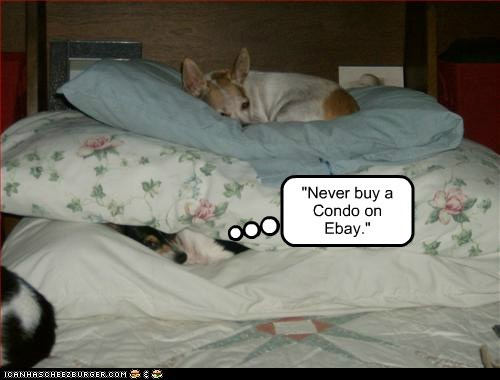 dogs bed ripoff what breed condo ebay - 6288266240