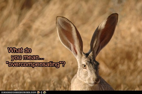 ears,field,overcompensating,rabbit