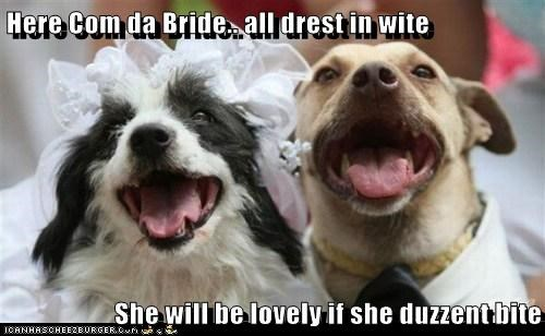 dogs bride marriage wedding bite what breed - 6288869632