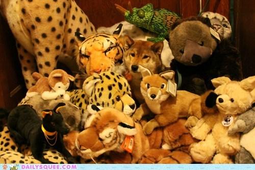 pet reader squee shiba inu stuffed animal - 6289856512
