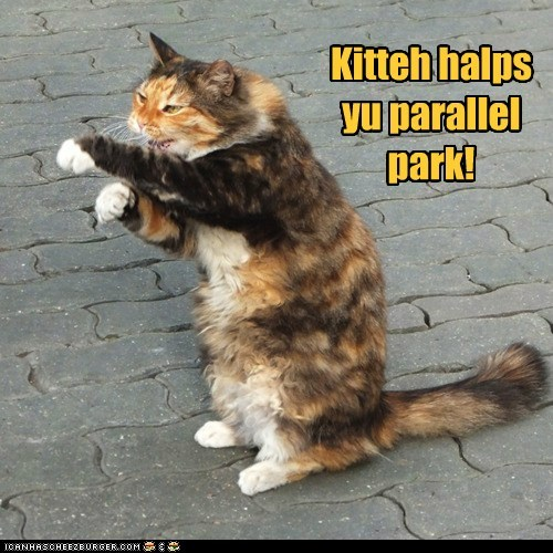 Kitteh halps yu parallel park!