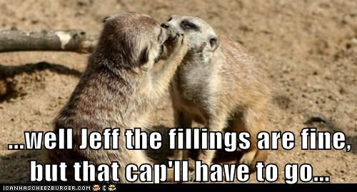 dentistry,fillings,KISS,meerkat
