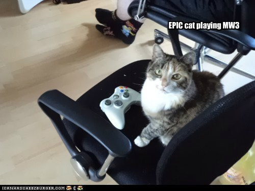 EPIC cat playing MW3