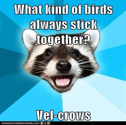 crows,jokes,Lame Pun Coon,Memes,puns,raccoons,velcro