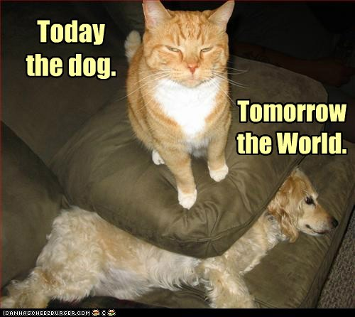 Cats conquer conquering dogs domination Interspecies Love lolcats Pillow pillows rule world world domination