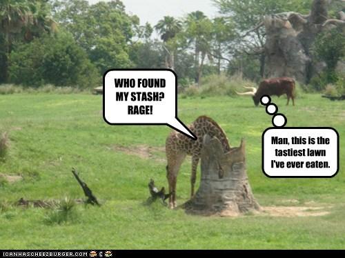 buffalo drugs giraffes high lawn munchies stash tasty - 6290755840