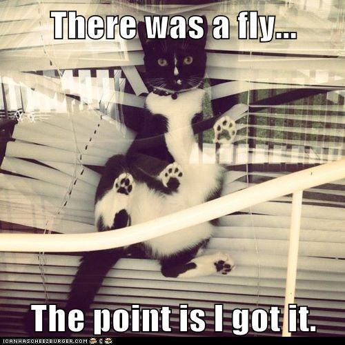 blinds catch destroy destruction fly kill messes Predator windows - 6291334400
