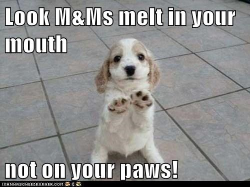 Look M&Ms melt in your mouth  not on your paws!