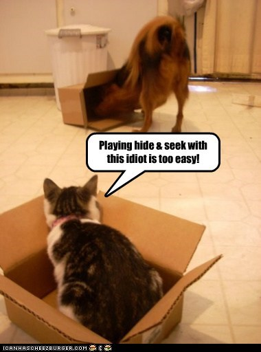 Funny picture of a cat and dog playing in boxes with the dog checking out the empty boxes and the meme is captioned as if the kitten is saying the dog is easy to fool at hide and seek game.