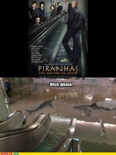 Piranhas On An Escalator