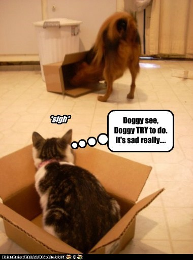 Doggy see, Doggy TRY to do. It's sad really.... *sigh*