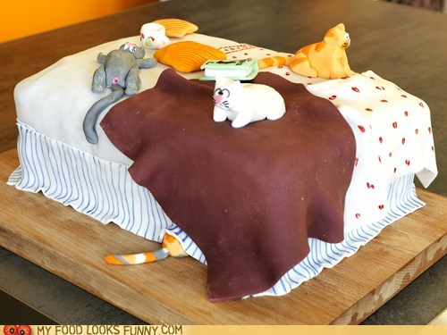 bed,cake,Cats,fondant,weird