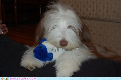 fish pet reader squee stuffed animal - 6292855296