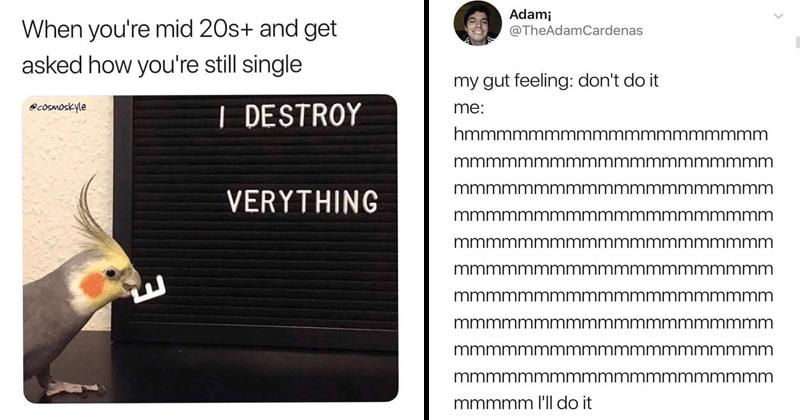 Self-deprecating memes.