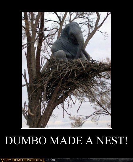dumbo,elephant,hilarious,nest