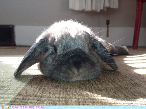 bunny happy bunday pet reader squee relaxing