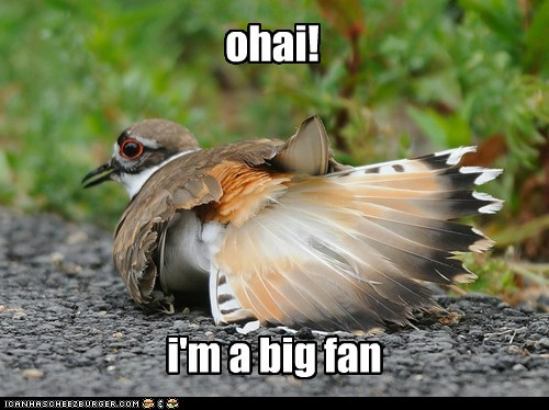 big fan,faking,killdeer,ohai,pun,wing