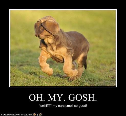 OH. MY. GOSH. *sniiiiffff* my ears smell so good!