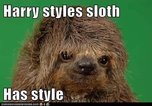 Harry styles sloth Has style
