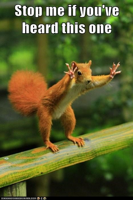 hands squirrel stop - 6294595072