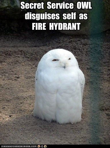 birds,captions,disguise,fire hydrant,Owl,owls,secret agent,secret service,shape