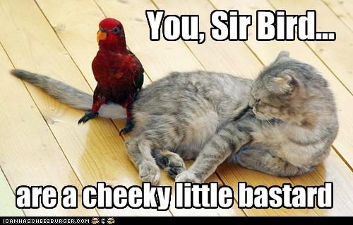 bird parrot sit tail trouble - 6294864640