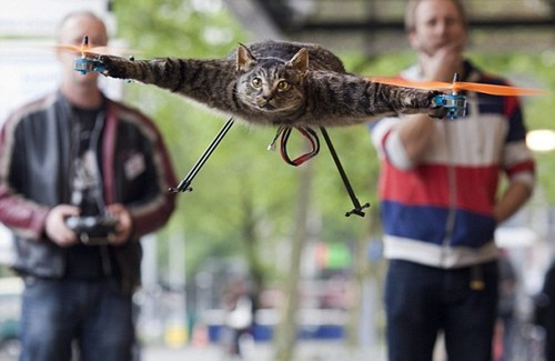 crazyass cat owner,orvillecopter