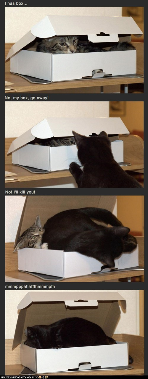 boxes,cardboard box,Cats,mine,on top,rude,stealing,two cats,vs