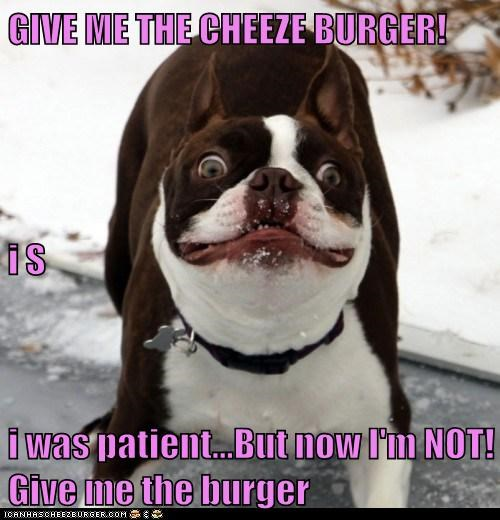 Cheezburger Image 6296422912