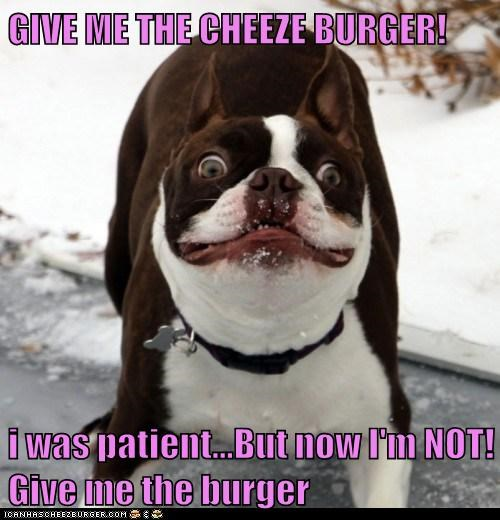 Cheezburger Image 6296426752