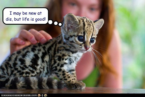 baby animals cheetah cub cute happy life is good new scratched - 6296444416