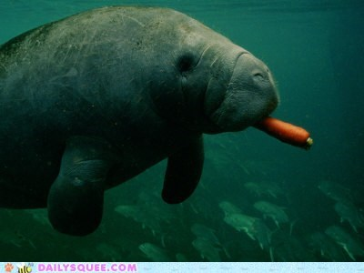 carrot manatee squee spree treat winner - 6296497152