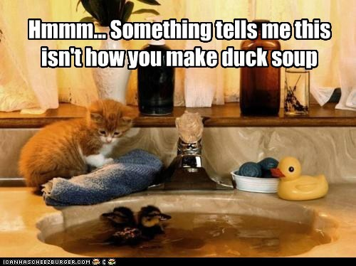 Hmmm... Something tells me this isn't how you make duck soup