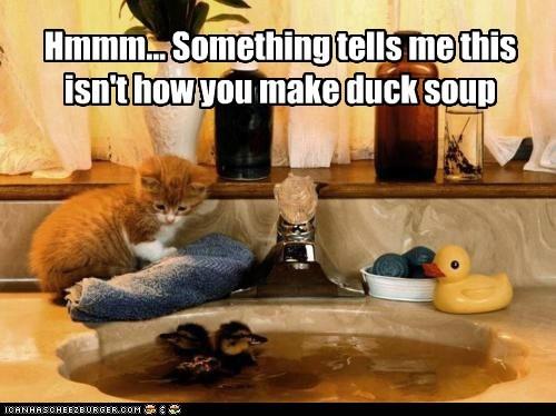 bathroom duck duckling sink soup - 6296548864