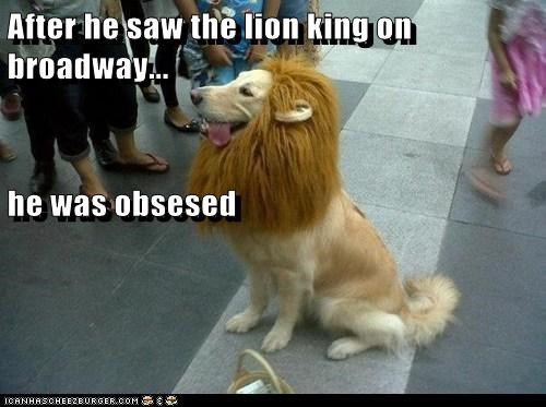 costume,dogs,golden retriever,lion,lion king,musical theater