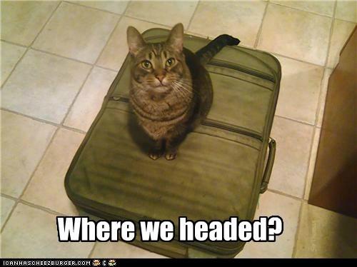 Where we headed? SirThomas