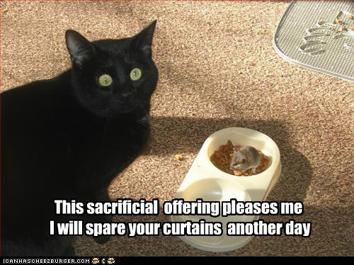 basement cat Cats food lolcats mice mouse nom offering sacrifice worship - 6296897536