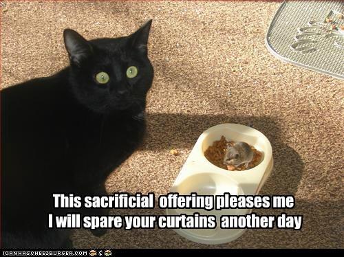 basement cat Cats food lolcats mice mouse nom offering sacrifice sacrificial lamb worship - 6296897536