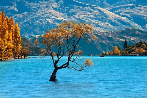 autumn lake new zealand tree - 6297016320
