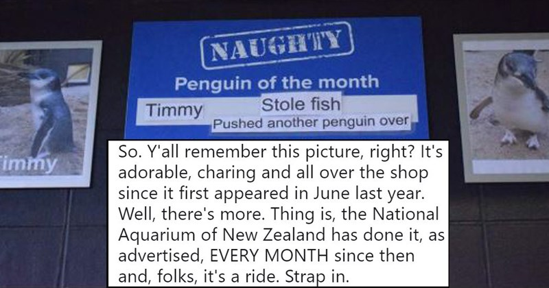 funny penguin stories
