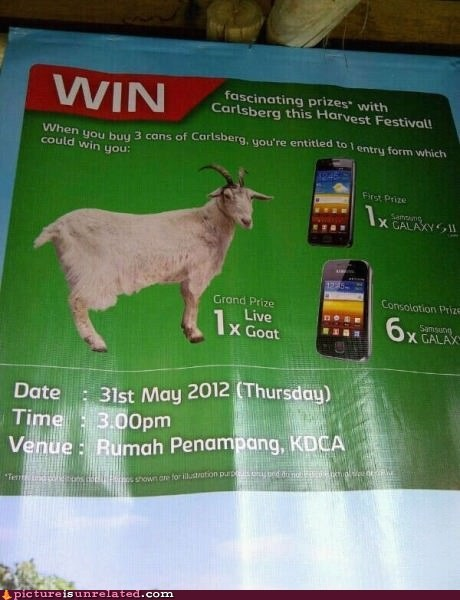 contests goats phones wtf - 6297158656