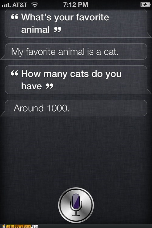 addiction Cats favorite animal siri you have a problem