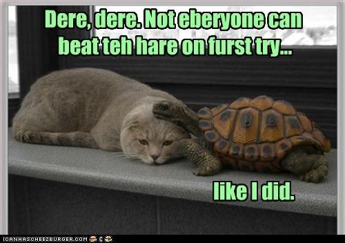 classic classics race tortoise turtle - 6297316096
