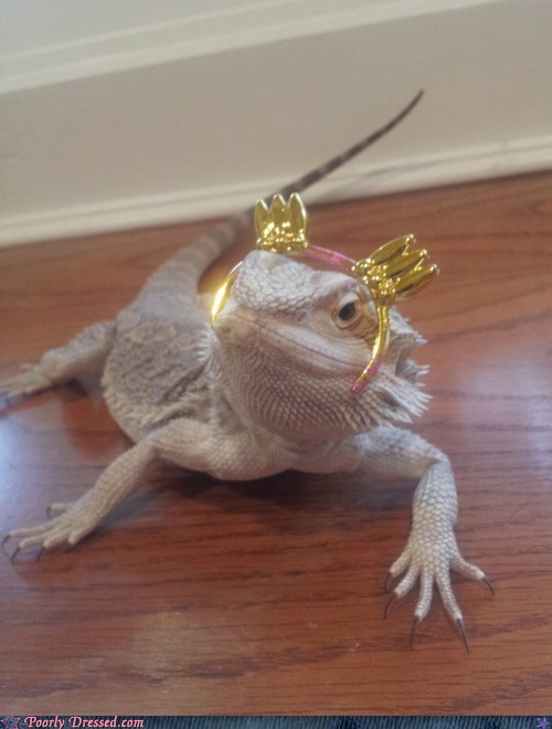 kawaii,lizard,pet,princess,tiara