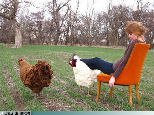 best of the week chicken city farm footstool furniture