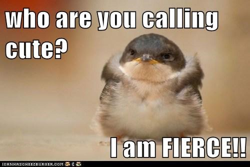 who are you calling cute? I am FIERCE!!