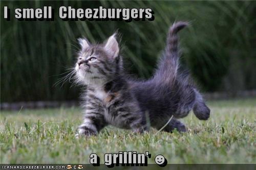 Cheezburger Image 6297704960