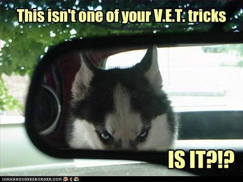 best of the week,car,dogs,Hall of Fame,huskie,suspicious dog,trap,trick,vet